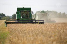 Румыния собирает рекордный урожай
