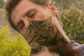 Кошка спасла хозяина при пожаре