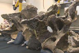 Найдены кости динозавра, весом со стадо слонов