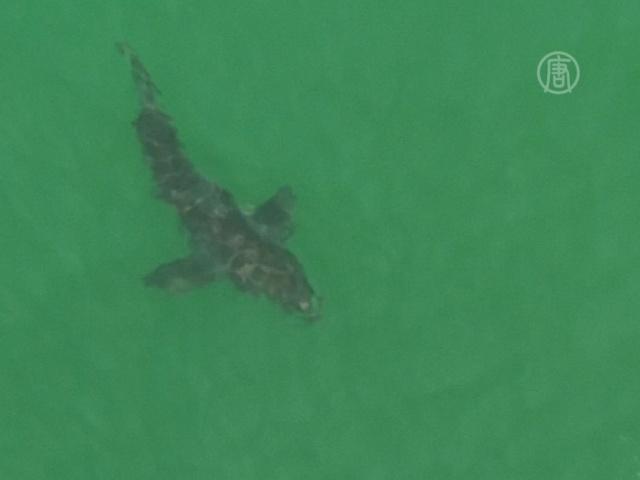 Австралиец погиб после атаки акулы