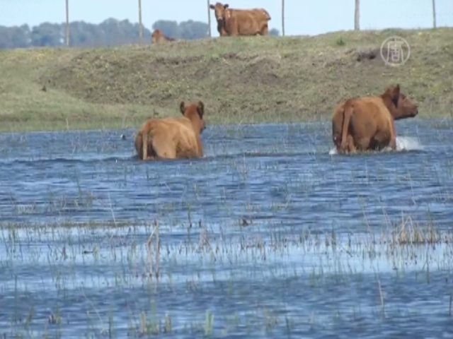 Фермеры Аргентины страдают от дождей