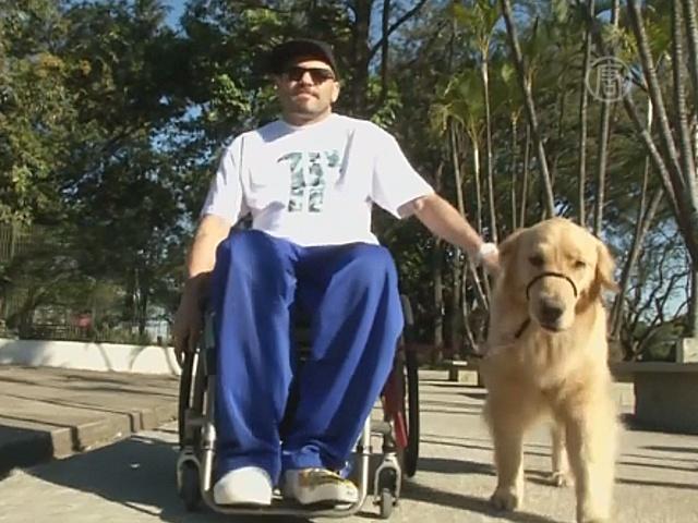 Бразильцы требуют «узаконить» собак-помощников