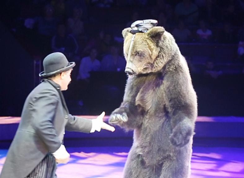 Бурые медведи парят под куполом цирка