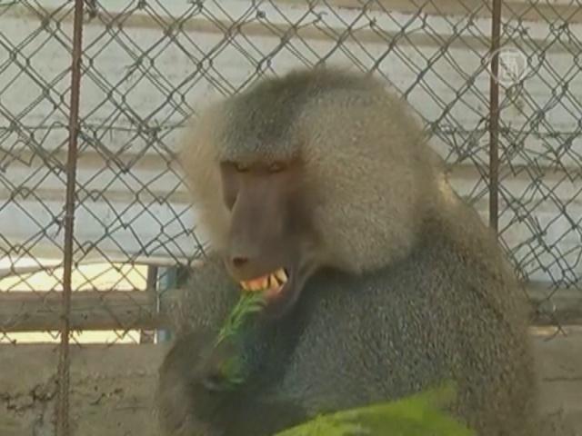 В зоопарке в Газе спасают уцелевших животных