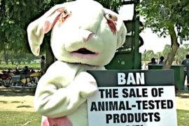 Защитники прав животных протестуют в Индии