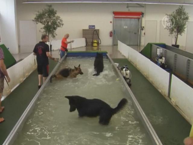 Немец открыл бассейн для собак