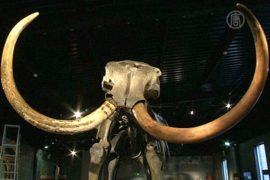 Скелет мамонта продадут на аукционе
