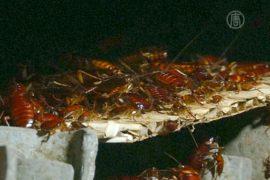 Тараканья ферма: китаец зарабатывает на насекомых