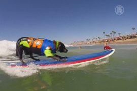 Собаки покатались на сёрфах на пляже Калифорнии