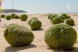 Австралийский пляж усыпало мистическими шариками