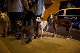Собаку больной Эболой медсестры хотят усыпить