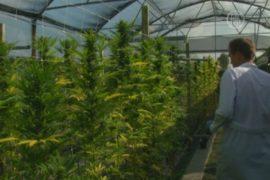 Итальянским военным поручили выращивать марихуану