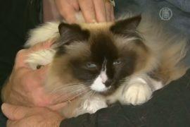 Из-за наличия кошки дом продали на $123 000 дороже