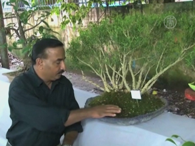 В Индии отпраздновали 50-летие дерева бонсай