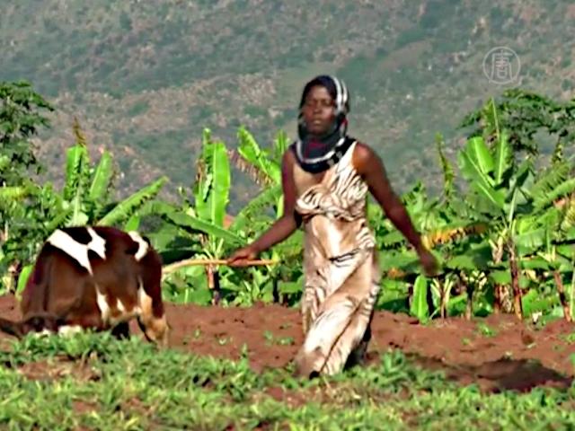 Биогаз помогает фермерам в Руанде выживать