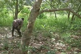 Деньги растут на деревьях на Берегу Слоновой Кости