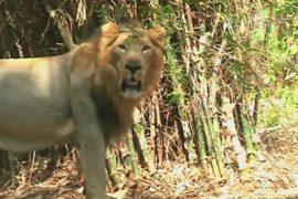 Зоопарк в Индии восстановлен после циклона