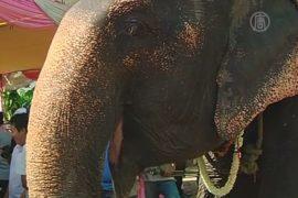 54-летнюю слониху проводили на пенсию с почестями