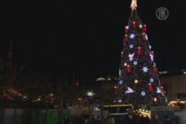 В Дортмунде установили ель высотой 45 метров