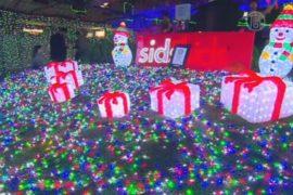 Канберру украсили миллионом рождественских огней