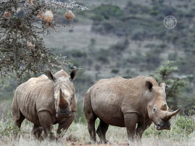 Защитить носорогов требуют от властей Индии
