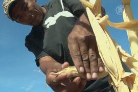 Гондурасу грозит голод из-за засухи