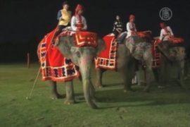 В Индии пресекли жесткое обращение со слонами