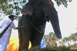 Слонов Тамилнада отправили на спа-курорт