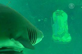 Дайверы украшали аквариум в обществе акул