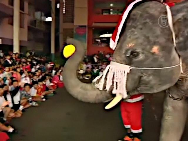Слоны-Санты раздают подарки детям в Таиланде