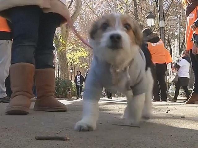 В Мадриде прошёл праздничный марафон с собаками
