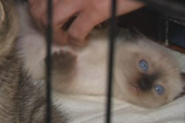 Выставка бездомных животных проходит в Москве