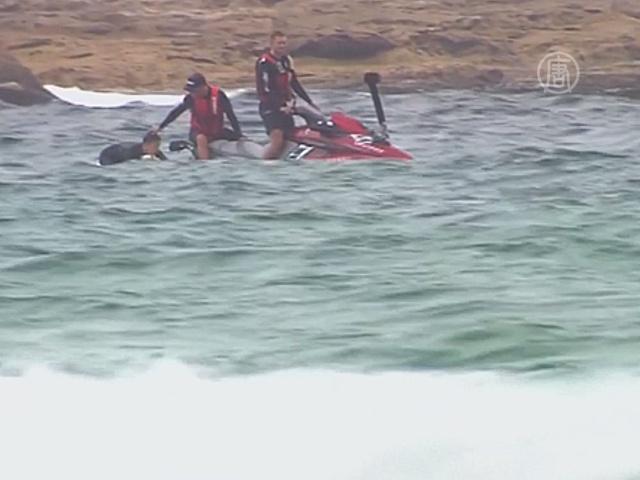 Акула переполошила сиднейский пляж
