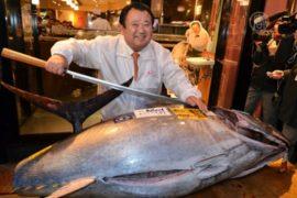 «Новогоднего» тунца продали за 37,5 тысяч долларов