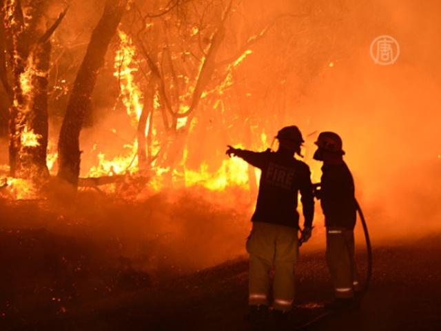 В Австралии – сильнейшие за 30 лет лесные пожары