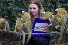 Всех обитателей Лондонского зоопарка пересчитали