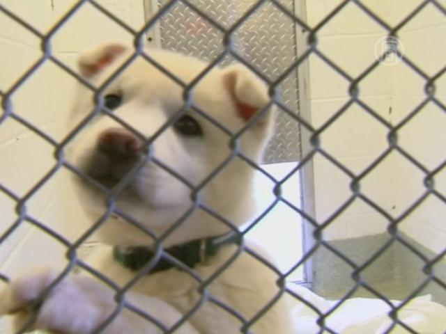 Собак спасли от ножа мясника