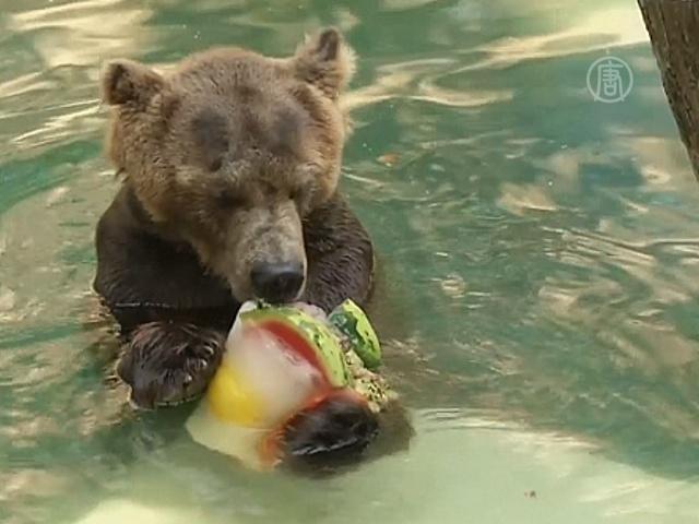 Питомцев зоопарка спасают от жары ледяным десертом