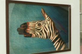 Художник рисует на руках исчезающих животных
