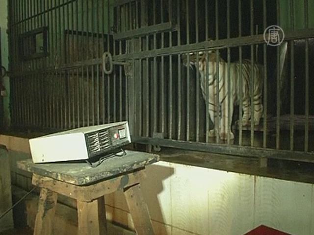 Хищников индийского зоопарка греют электропечами
