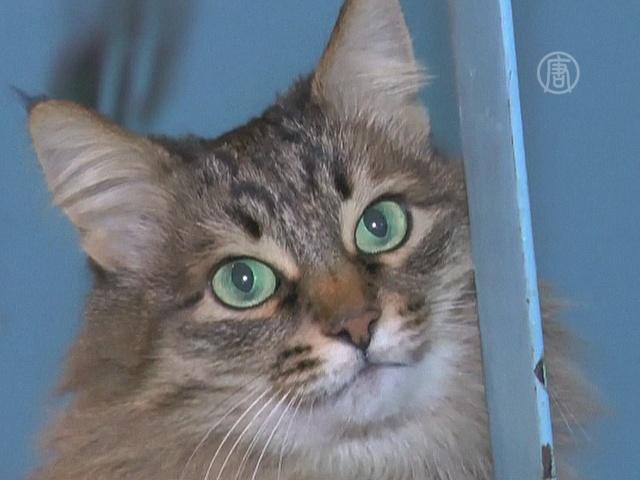 Бездомная кошка спасла брошенного младенца