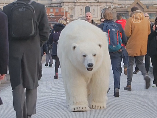 Белый медведь побродил по Лондону ради рекламы