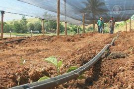 Бразильцы роют колодцы из-за засухи