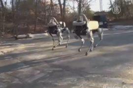 Google показала новую собаку-робота
