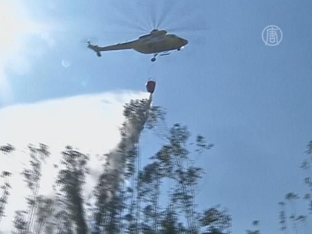 Пожар бушует в Чили, уничтожено 2000 гектаров леса
