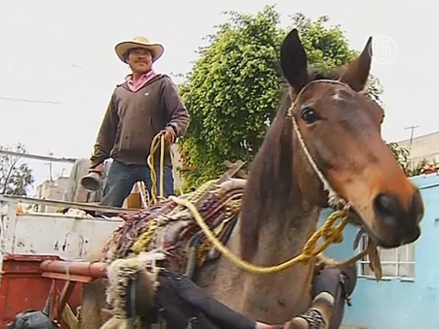 Лошади в Мехико больше не будут возить мусор