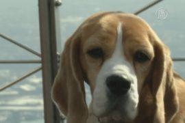 Лучшая собака Америки позирует перед журналистами