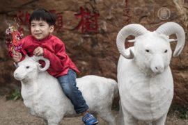 Фэншуй-эксперты: чего ожидать от года овцы?