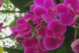 Зимнее шоу орхидей порадует ньюйоркцев