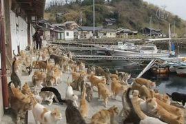 Японский островок наводнили кошки